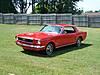 Mustangside.jpg
